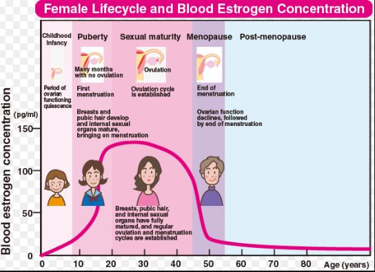 Low Estrogen Causes, Symptoms, Side Effects, Weight Gain